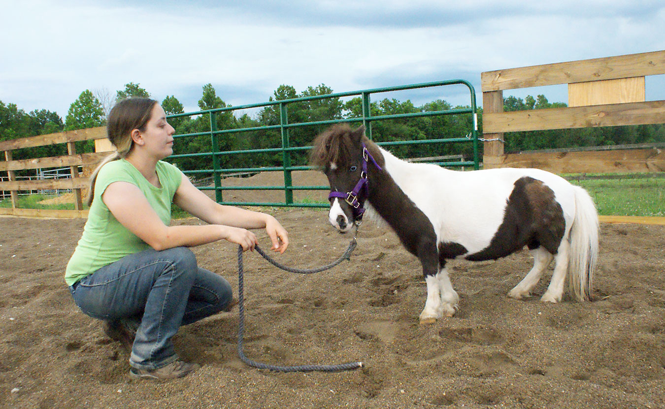 From head to hoof, People & Animal Learning Services (PALS) therapy horse Daisy Mae stands a full 2 feet 4 inches tall. Shown here with a PALS team member, Daisy Mae often visits nursing homes, recreation centers, schools, therapy centers, and more, in addition to working with clients in the PALS Horsemanship Program. | Photo by Sierra Vandervort