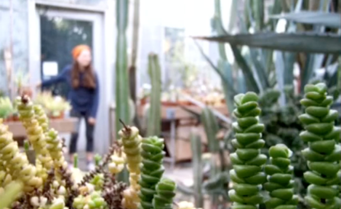 Rachel Bahr's Academy of Science and Entrepreneurship English 11 class created videos exploring their sense of place. A still from Lily Macneil Kitscher's video of the Jordan Greenhouse is pictured here. | Image by Lily Macneil Kitscher