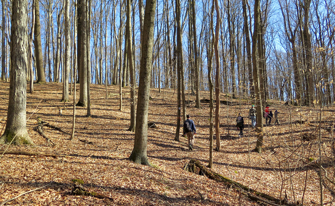 """Hikers wander along the trails at Sycamore Land Trust's Porter West. Writer Jonah Chester describes the preserve as a """"diamond in the rough,"""" with sinkholes, a former composting site, and a cemetery. 