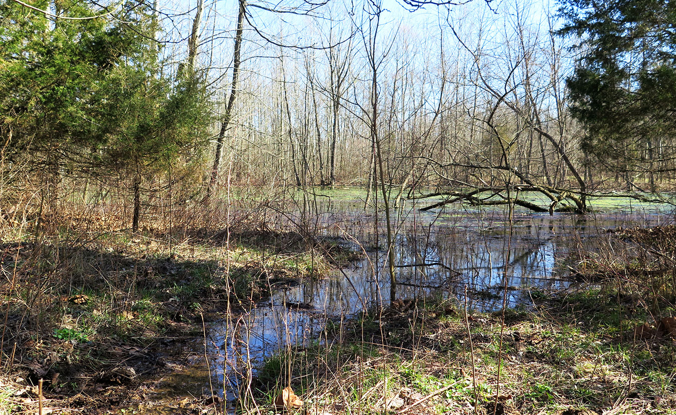 Porter West features a pond along the trail. | Limestone Post