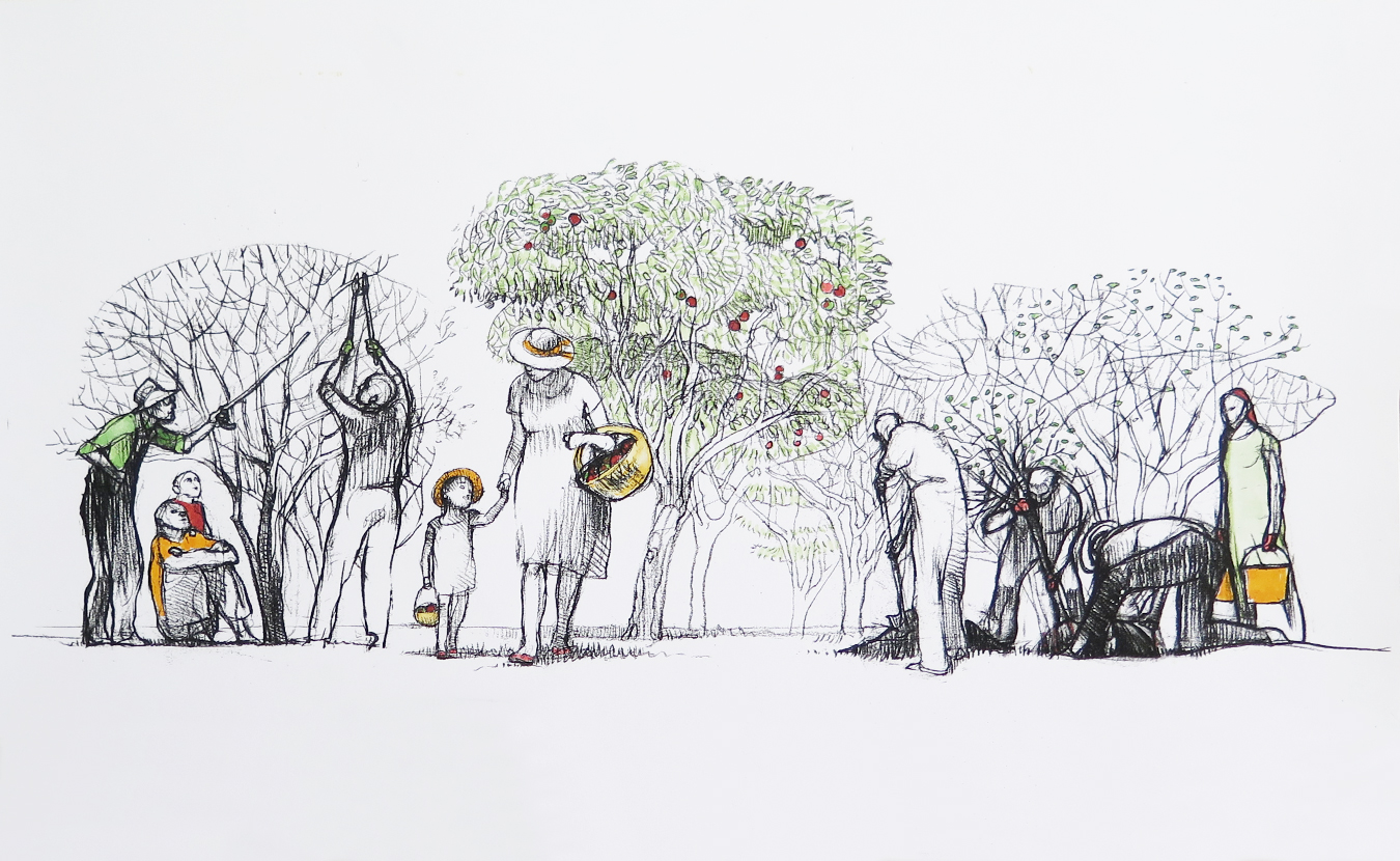 Since 2010, the Bloomington Community Orchard has grown from a grassy acre into a fully planted orchard. But its roots stretch throughout the city and beyond, connecting with community members, businesses, and other organizations through such programs as skill-sharing classes and partner plantings. | Illustration by Mark Blaney