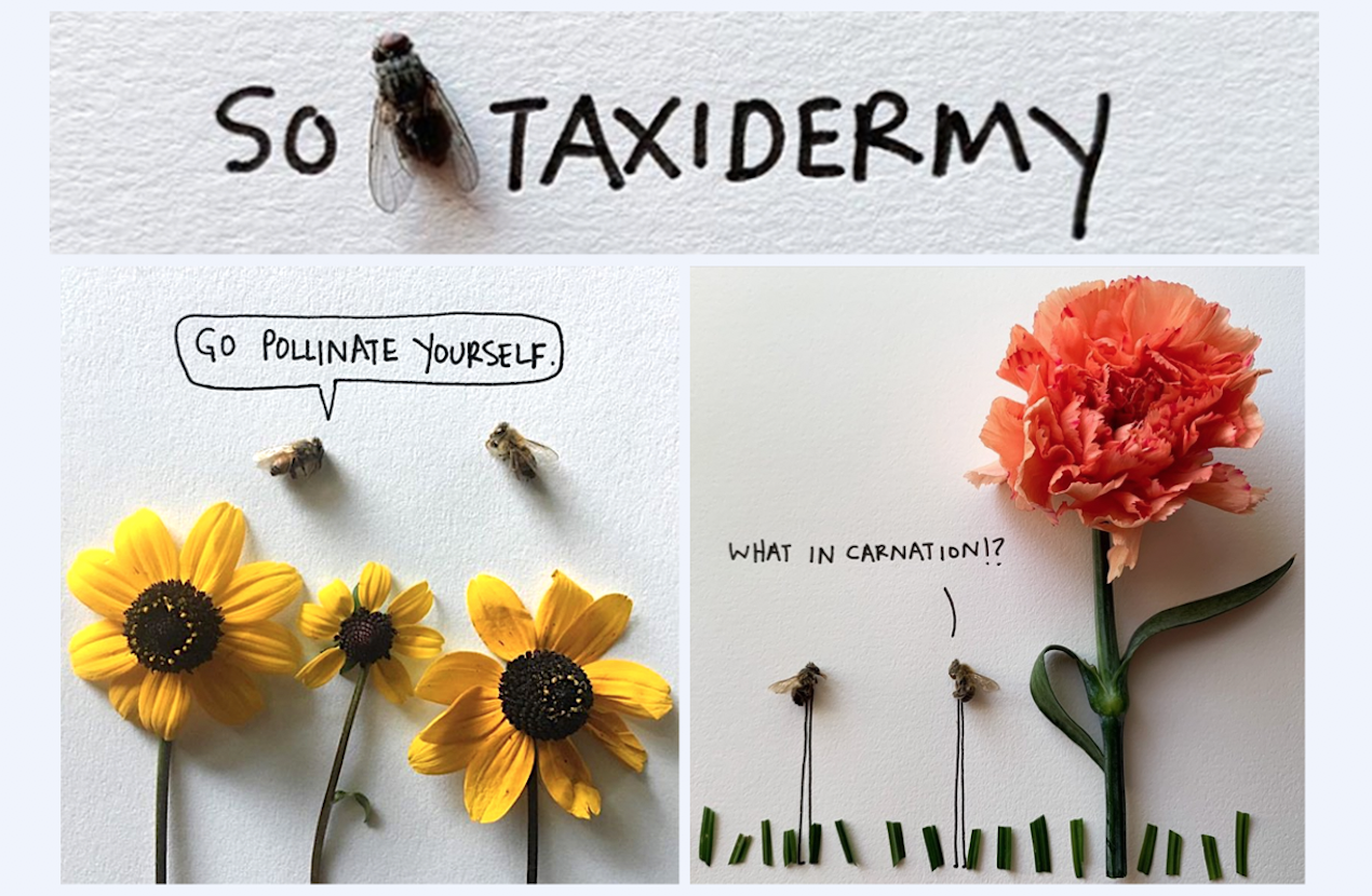 Ali Beckman brings dead bugs to life on Instagram @SoFlyTaxidermy, which has more than 145K followers. A collection of her buggy illustrations will be published by Red Lightning Books in 2021. | Photos courtesy of Ali Beckman