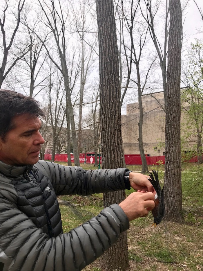 IU's Alex Jahn, pictured here with an American robin, says birds can be 'barometers of change, a species indicator to understand how changes are impacting the greater ecosystem.'   Courtesy photo